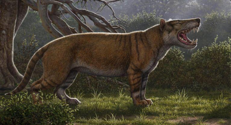 Fóssil recentemente encontrado mostra carnívoro assustador do tamanho de um urso