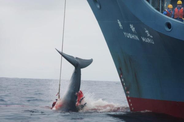 Baleias 600x400, Fatos Desconhecidos