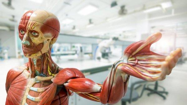 Corpo Humano 600x337, Fatos Desconhecidos