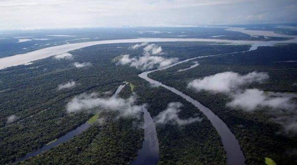 Monte Mabu Rain Forest 600x334, Fatos Desconhecidos