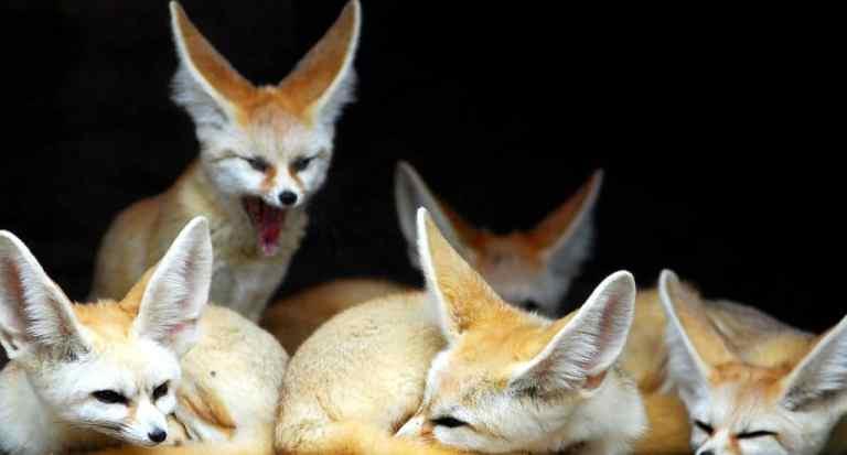 7 animais selvagens que se transformaram em animais de estimação