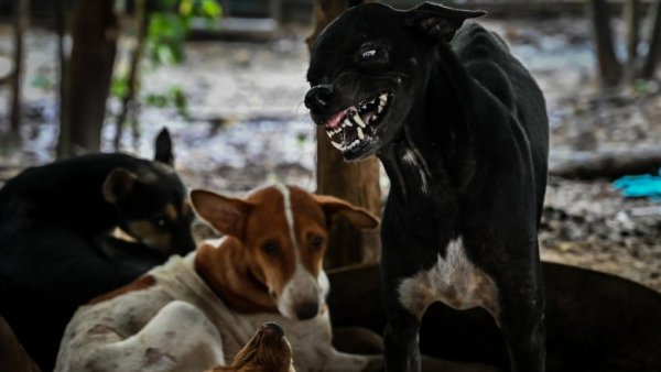 If The Zombies Dont Get You The Wild Animals And Feral Dogs Will 1564174580 600x338, Fatos Desconhecidos