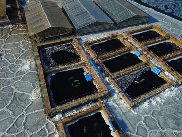Imagens Das Baleias Presas 600x450, Fatos Desconhecidos