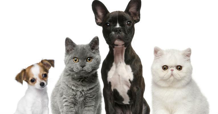 Quem E Mais Inteligente Caes Gatos 2 1, Fatos Desconhecidos