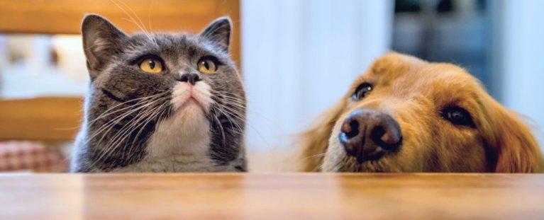 Quem é o mais inteligente: gato ou cachorro?