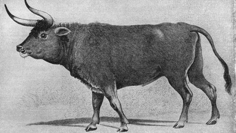Hitler queria reviver bisão extinto há 9000 anos