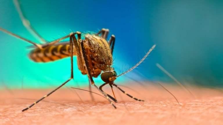 E se os mosquitos fossem extintos?