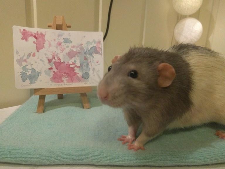 Este ratinho aprendeu a pintar e a internet está se derretendo de amor por ele