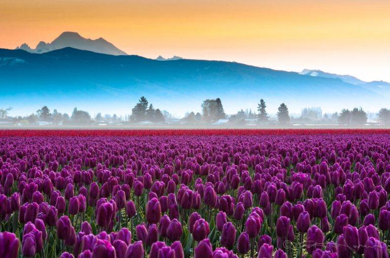 7 lugares mais lindos do mundo para aproveitar a primavera