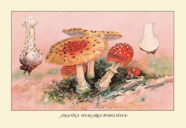 Cogumelos 600x413, Fatos Desconhecidos