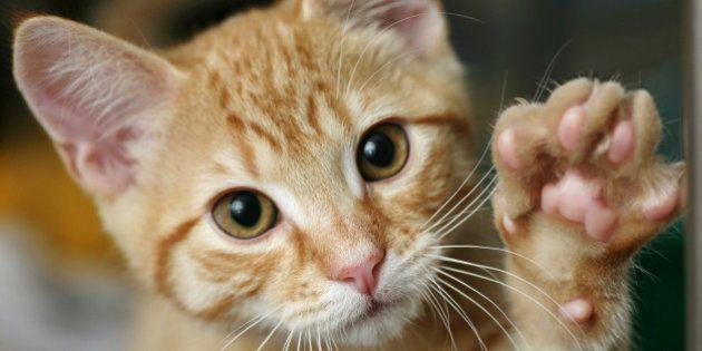 7 comportamentos estranhos de gatos explicados