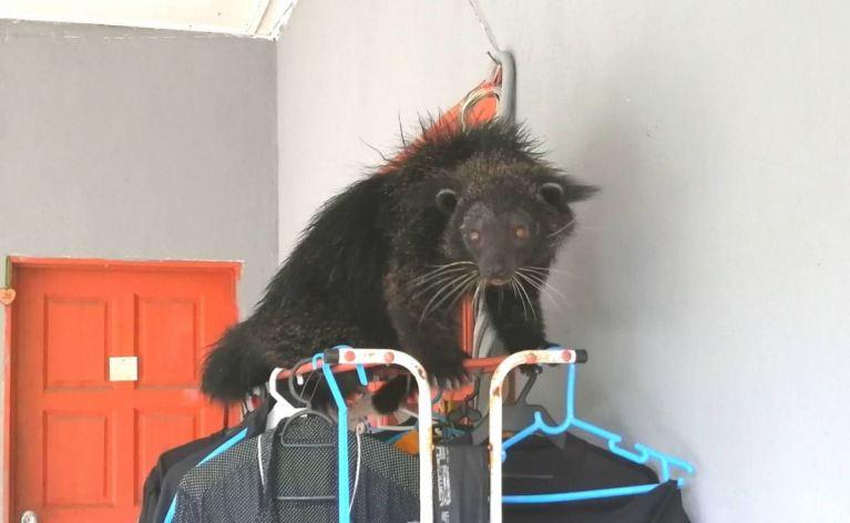 Animal que se parece com uma fusão de gato com urso intriga moradores
