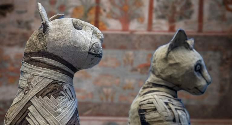 Arqueólogos se surpreendem ao 'abrir' múmia de gato egípcio