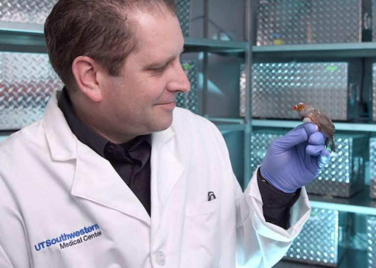 Cientistas conseguiram inserir memórias artificiais em um pássaro