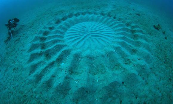 O Que Sao Esses Circulos Misteriosos Encontrados No Fundo Do Mar 2, Fatos Desconhecidos