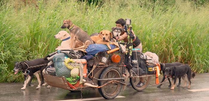 Mexicano viaja de cidade em cidade resgatando cães doentes e feridos