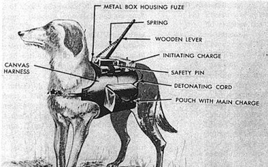 Cachorro Bomba, Fatos Desconhecidos