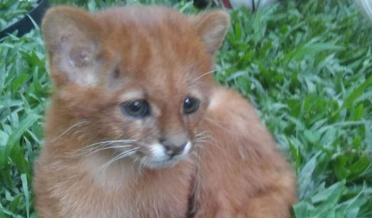 Jovem adota um gatinho, mas ao levar no veterinário, descobre algo impressionante