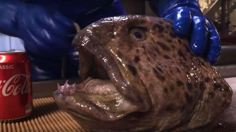 Cabeça de peixe decepada devora lata de Coca-Cola em vídeo assustador