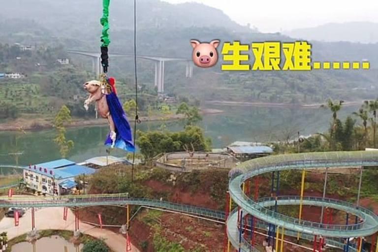 Fizeram um porco pular de Bungee Jump e foi isso que aconteceu