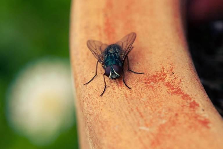 Isso é o que acontece com a mosca, se você acertá-la sem conseguir matar