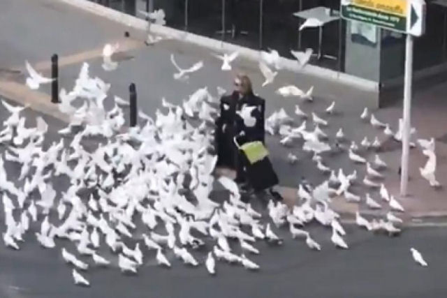 Isso é o que os pombos estão fazendo com os moradores nas quarentenas na Europa
