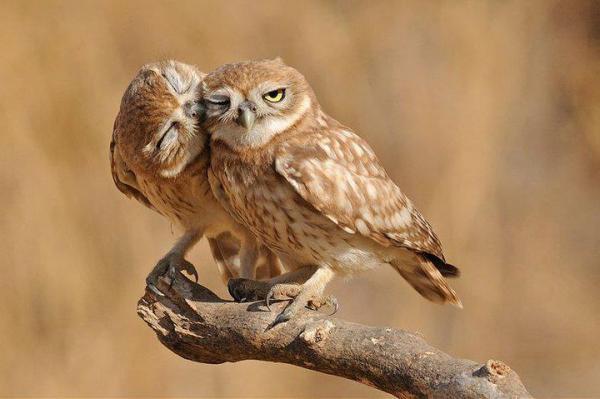 7 animais que possuem um companheiro pra toda a vida