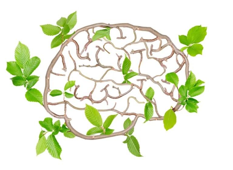 Veja 4 formas de aumentar o crescimento de neurônios no seu cérebro