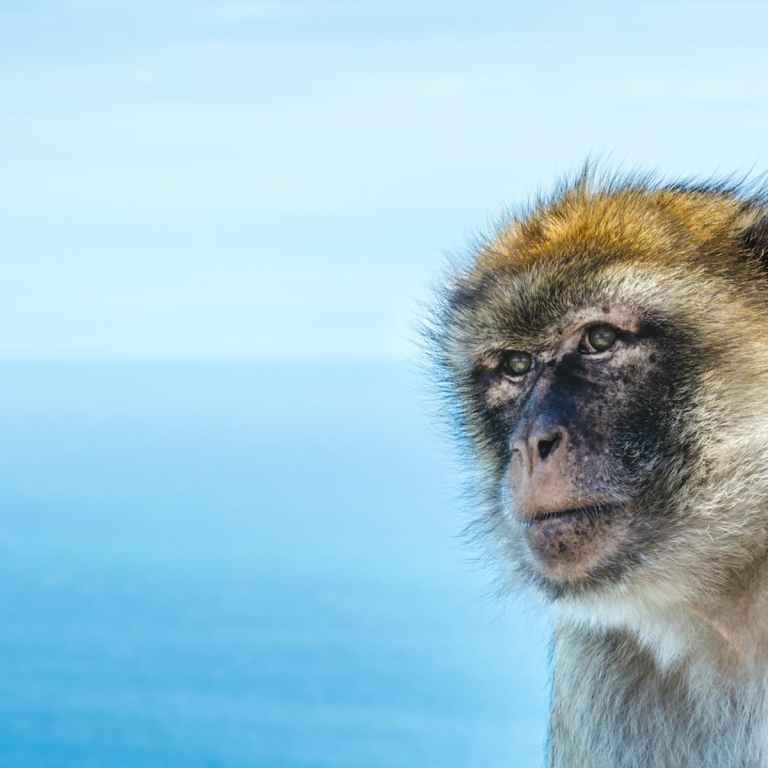 Macacos já extintos vindos da África cruzaram o Atlântico