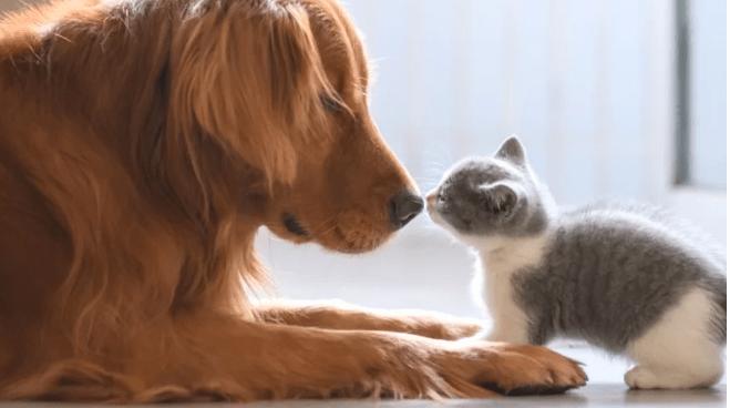 Qual animal é mais inteligente, cachorro ou gato? Estudo responde