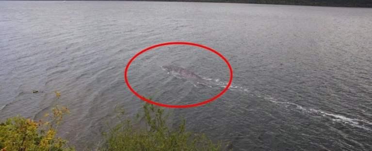 Existe uma nova foto do monstro do Lago Ness, mas tem um problema