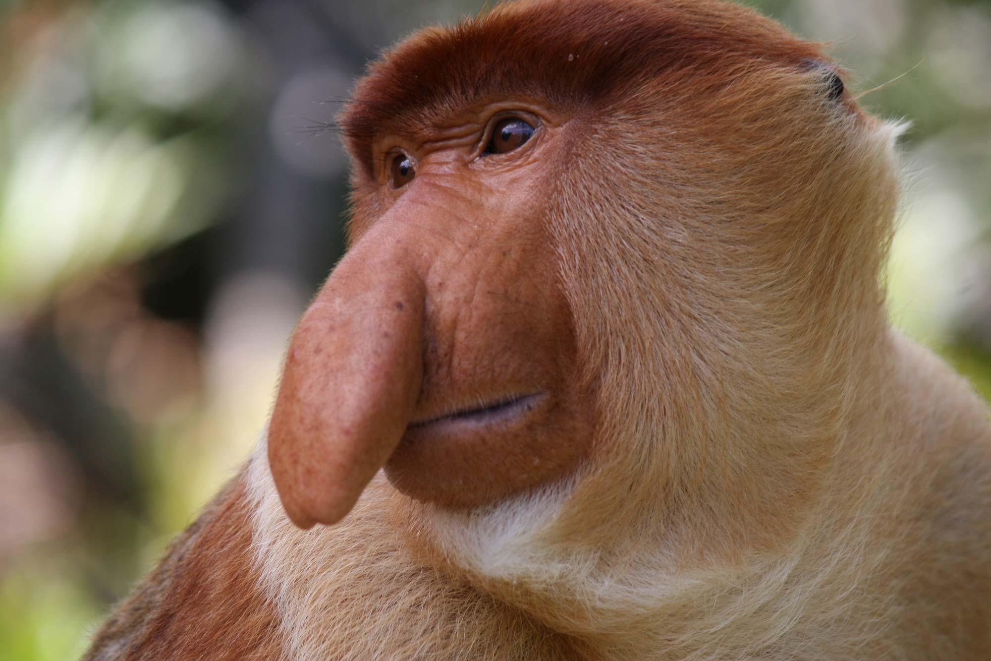 7 animais 'feios' que são ameaçados de extinção