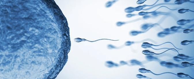 Forma como o esperma nada é só uma ilusão de ótica