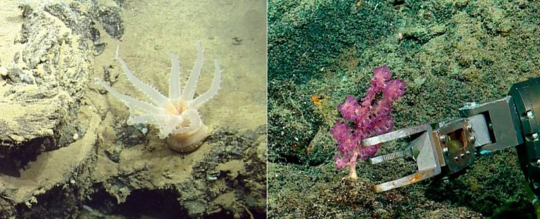 Foram descobertas 30 novas espécies no mar profundo perto de Galápagos