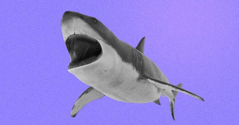 A poluição dissolveu os dentes e a pele desse tubarão