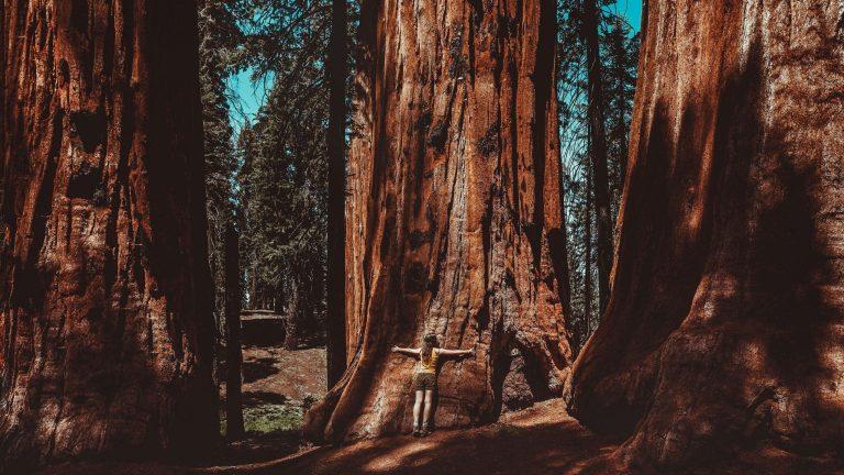 Conheça a história da mulher que viveu 2 anos em cima de árvore milenar para evitar sua derrubada