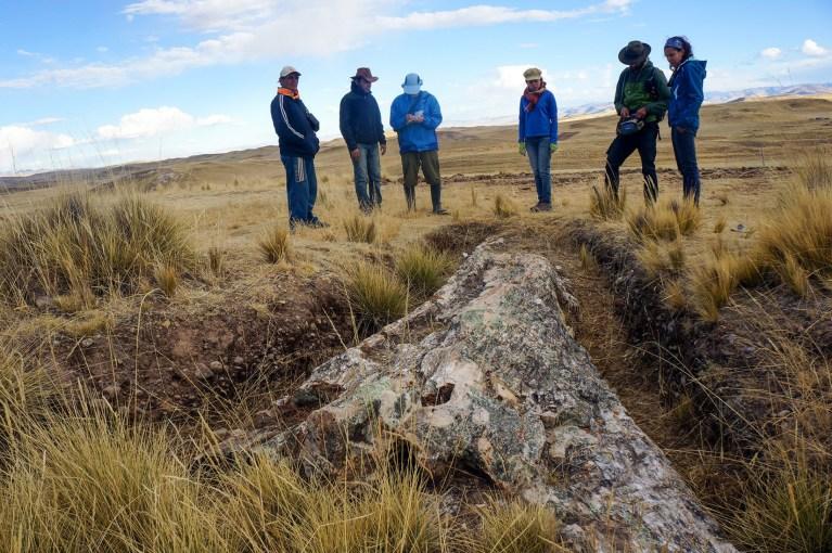 Árvore fóssil de 10 milhões de anos revela surpresas sobre o passado antigo