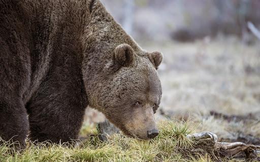 7 animais que felizmente saíram do risco de extinção