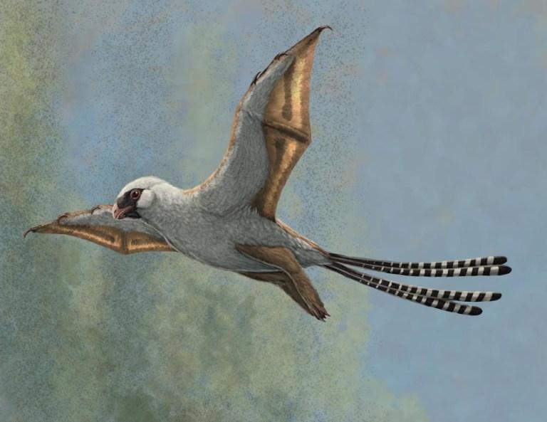 Essa espécie de dinossauro foi extinta porque tinha asas, mas não sabia voar