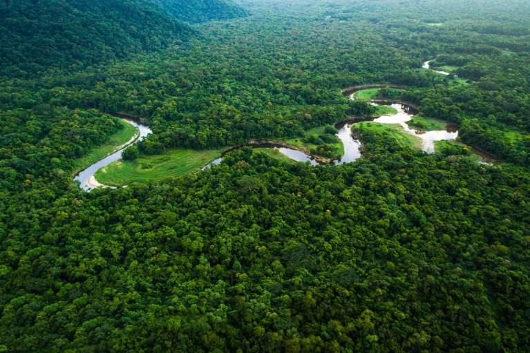Principal motivo das mortes de árvores na Amazônia foi descoberto