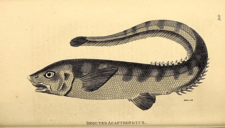 Ilustrações retratam como naturalistas registravam suas descobertas no passado