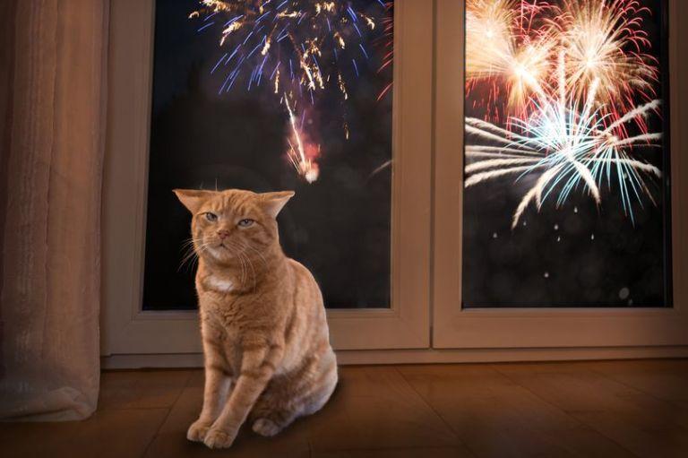 Gatos são mortos após atarem fogos de artifício em seus corpos