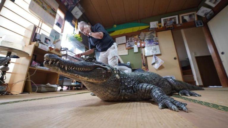 Japonês compartilha casa com crocodilo há 40 anos