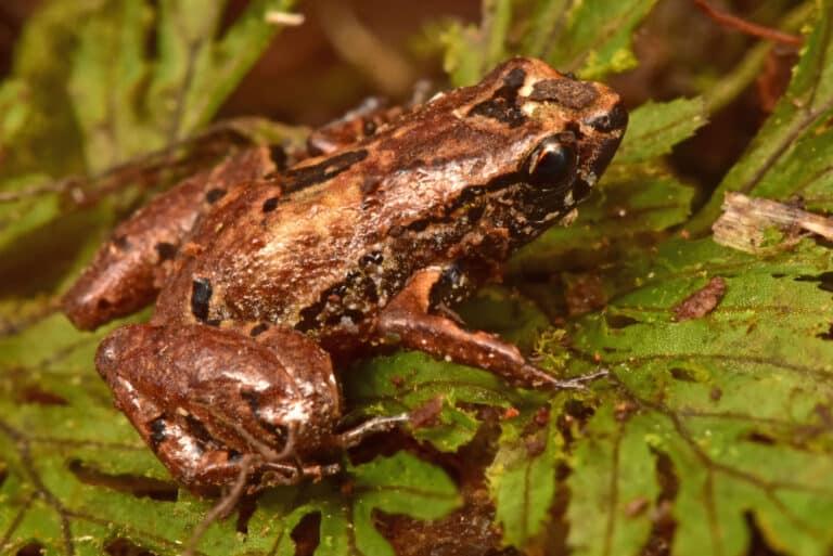 Cientistas decobriram um monte de novos animais