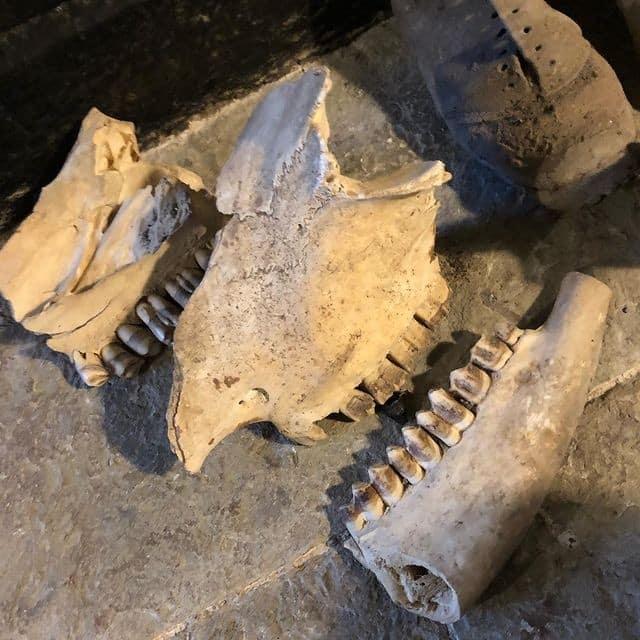 Itens usados por medievais para afastar bruxas são encontrados