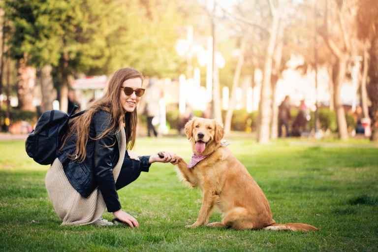 Afinal, os cachorros entendem o que falamos?