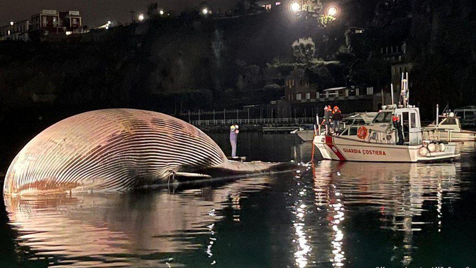 Uma das maiores carcaças de baleia foi encontrada na Itália