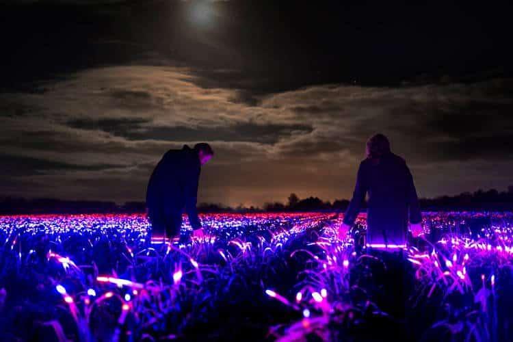 Artista transforma plantações agrícolas utilizando lâmpadas LEDs