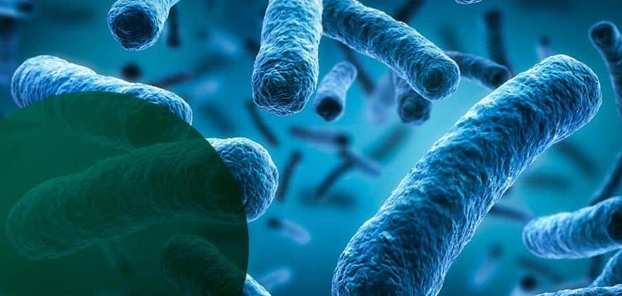 Bactérias foram vistas mudando de forma para evitar antibióticos