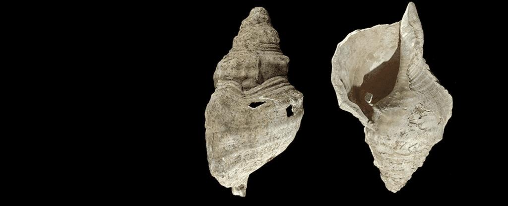 Esse é o som assustador de uma concha tocada pela primeira vez em 17 mil anos
